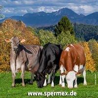 SPERMEX GmbH