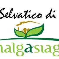 MalgAsiago