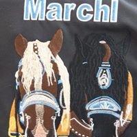 Pferdezucht Marchl