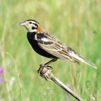 Birding Drives Dakota