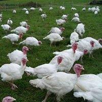 Jones Turkey Farm