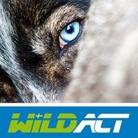 Wildact Adventure