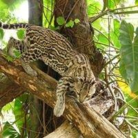 Zoological Society of Trinidad & Tobago Inc.