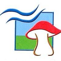 Associació Micològica de TGN