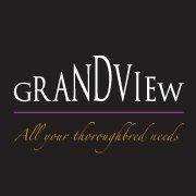 Grandview Thoroughbreds