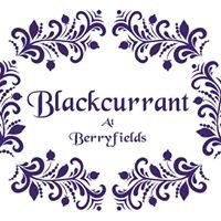 Blackcurrant at Berryfields