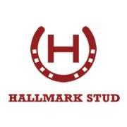 Hallmark Stud