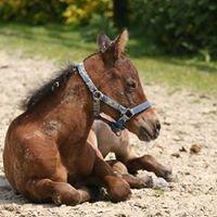 Döring Quarter Horses