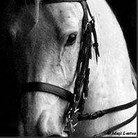 Waltzing Horse Farm
