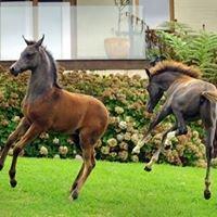 Valinor Park Arabians