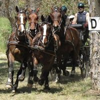 Art of Driving Equestrian