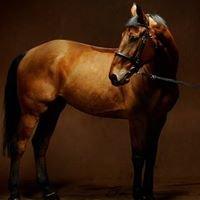 Comandor Equestrian Center