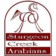 Sturgeon Creek Arabians