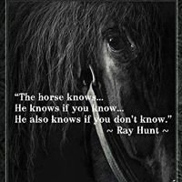 Natural Connections Equine Assisted Learning and Psychotherapy