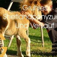 Shetlandponyzucht Gruhle Shettys - Shetlandpony Stud