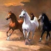 Versatile Arabian Horse Association
