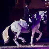 Ricardo Moura Tavares - Quinta do Vale Horses