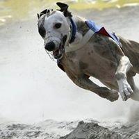 Koiratarvike Fast Dog