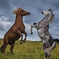 Molėtų Žirgai