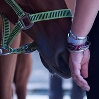 EQUIS Trening Koni i Jeźdźców