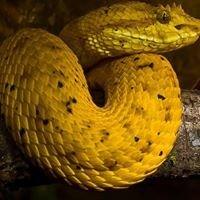 Serpentario Monteverde