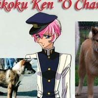 """Shikoku Ken """"O Chanur"""" kennel kensha"""
