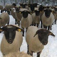 Parmu lambakasvatus-ja käsitöötalu