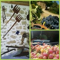 Douris winery