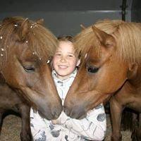 Gjeldokk Hestesenter