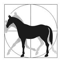 Physiotherapie für Pferd und Reiter
