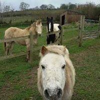 Devon Horse and Pony Sanctuary