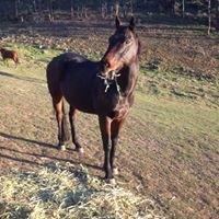 Medicine Horse Australia