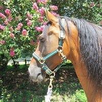 Gracewood Farm Paso Fino Horses