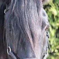 Kyra Londos Equestrian