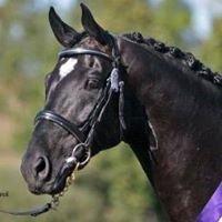 Karingal Equestrian