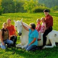 Peter Pfister & Schade - Natürliche Partnerschaft mit Pferden