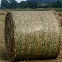 Horse Hay Bales for sale in Perthshire