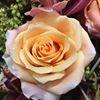 Flowers Et Cetera