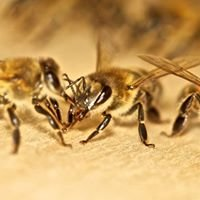 Правильные пчёлы - Правильный мёд