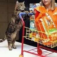 Frida's Pet Shop