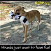 RDRP - Racing Dog Rescue Project