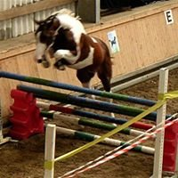 Aufenanger Sporthorses
