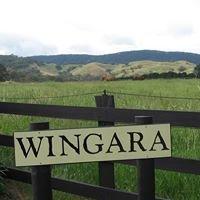 Wingara Thoroughbreds