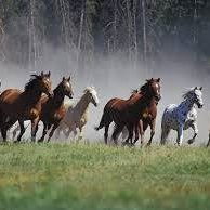 Equestrian Masterclass