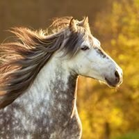 Lisa Dijk Photography - Paardenfotografie