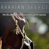 Arabian Select