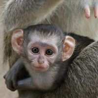 Funky Monkeys Backpackers & Safaris
