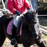 Nomad Horses Oy