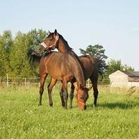 Stajnia Hav-Anna Pensjonat dla koni