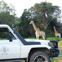 Giraffe View Safari Camp, Plettenberg Bay